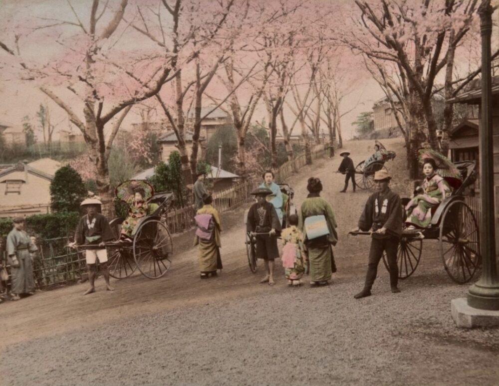 Anonimo, Ciliegi fioriti a Yokohama, 1880-1900 Copyright © MUSEC / Fondazione Ada Ceschin e Rosanna Pilone