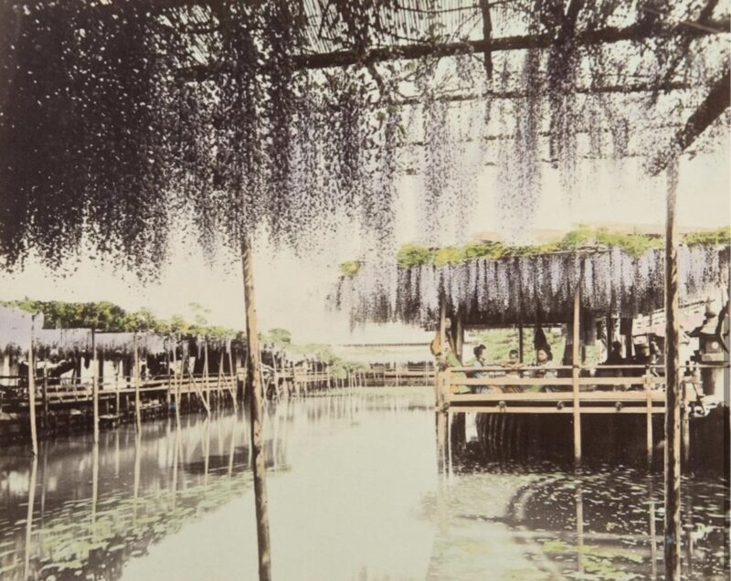 Anonimo, Casa da tè con glicini al Kameido a Tokyo, 1880 ca Copyright © MUSEC / Fondazione Ada Ceschin e Rosanna Pilone