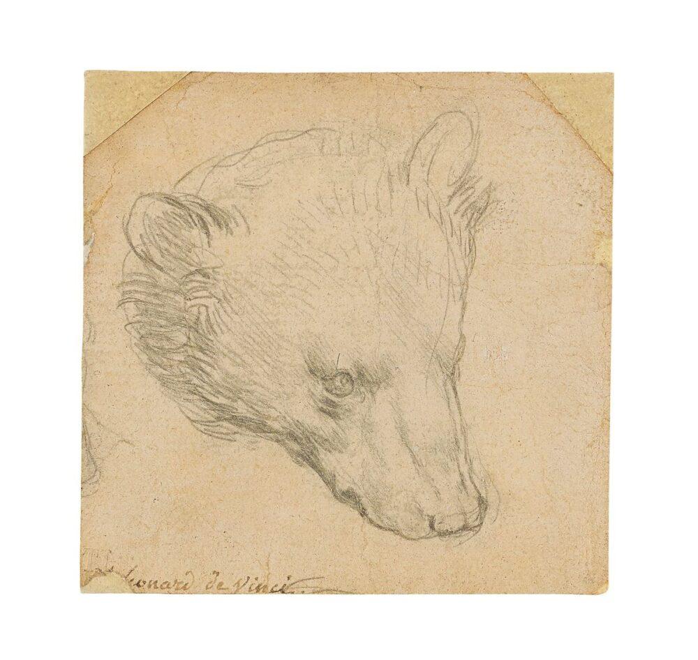 Head of a Bear, di Leonardo