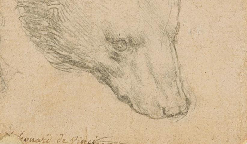 Head of a Bear, di Leonardo (particolare)