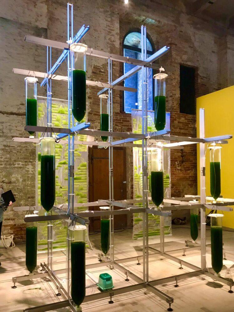 L'installazione di EcoLogicStudio