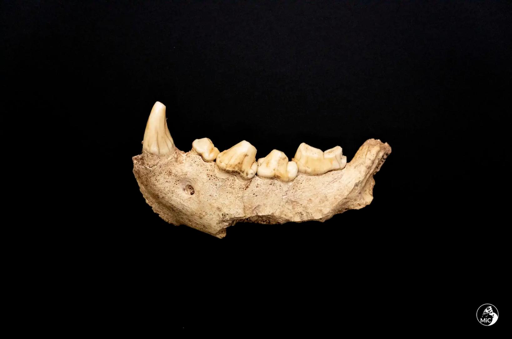 Nove uomini di Neanderthal. Clamorosi ritrovamenti nella Grotta Guattari al Circeo