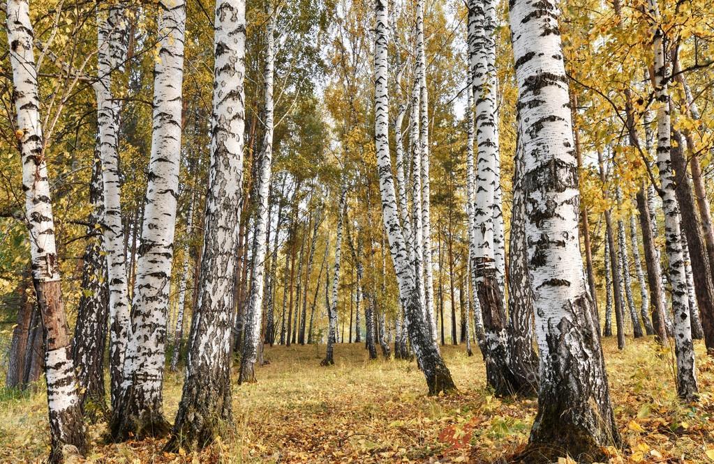 """In arrivo Risonanze, il festival del """"legno che suona"""": un'immersione nellatradizione secolare dell'abete"""