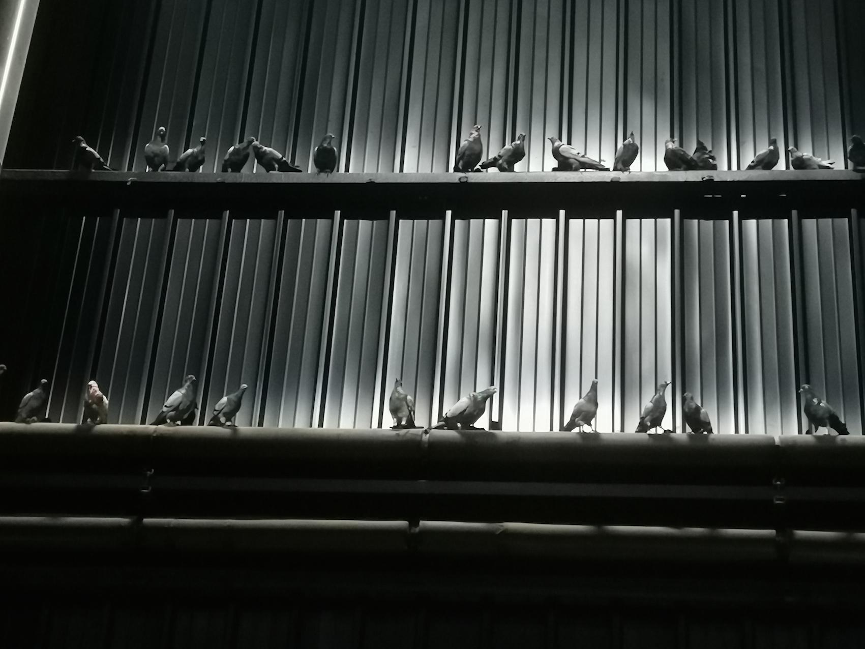 Flop Cattelan. All'Hangar Bicocca tornano i piccioni vecchi di 24 anni