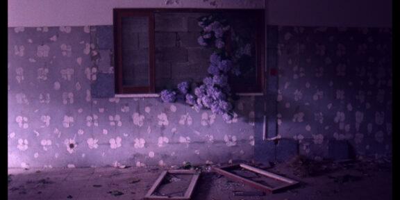 Un'immagine da Flores di Jorge Jacome. Il corto fa parte della selezione di documentari dei Formafantasma per la sezione Bloom.