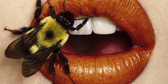 Irving Penn, Bee (A), New York, 1995, © The Irving Penn Foundation